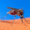 Как бороться с комарами?
