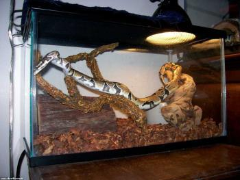 Змея в частном террариуме