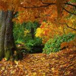 Почему осенью листья меняют цвет? Почему осенью листья желтеют?