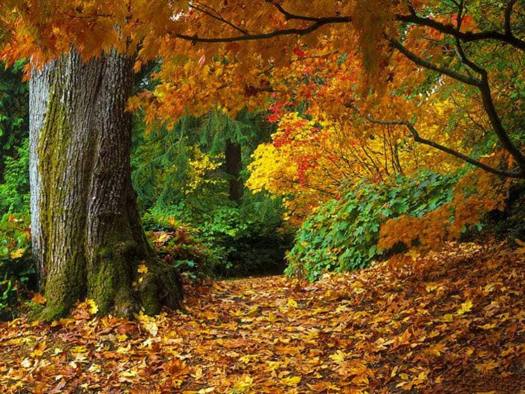 Почему листья осенью меняют цвет