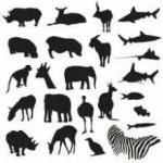 Почему у некоторых животных 2 ноги, а у других 4