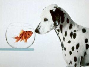 dog 300x224 Как видят собаки?