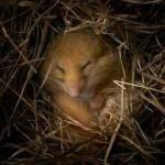 Почему и зачем животные впадают в спячку?