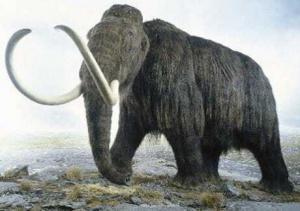 mammal 300x211 Когда появились млекопитающие?