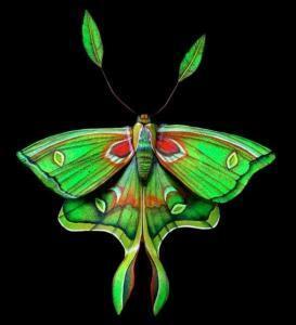 moth 273x300 Цветные мотыльки