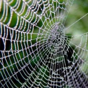 spiders web 300x300 Почему пауки плетут паутину?