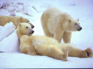 10 животных арктики