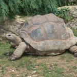 Почему черепахи долго живут?