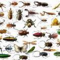 Самооборона насекомых