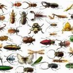 Насекомые и их личинки