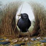 Птицы шалашники-гнезда