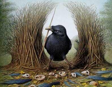 Птица-шалашник