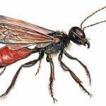 Инстинкт у насекомых