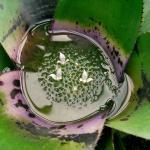 У какого растения есть бассейн а какое душит в своих «объятиях»?