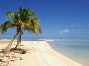 Кокосовые пальмы у моря