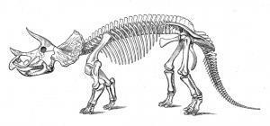 Восстановленный скелет трицератопса