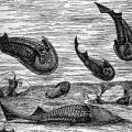 Первые рыбы
