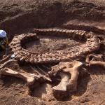 Как мы узнали о существовании динозавров?
