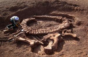 Раскопки динозавра