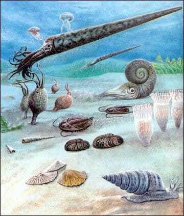 Подводный мир и наутилус