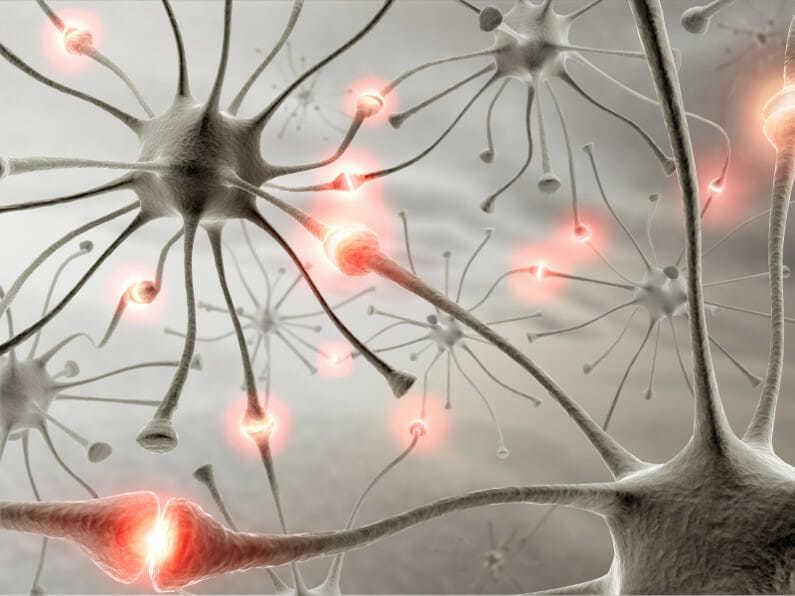 Нерв передает сигнал в головной мозг