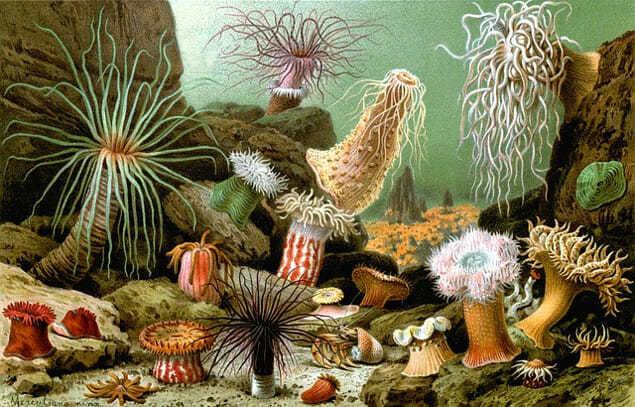 Растения на дне моря