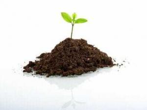 Посаженное растение