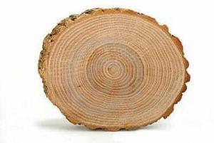 Кольца дерева