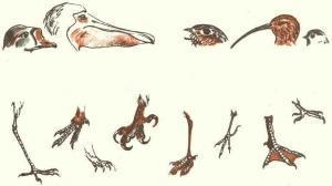 Клювы и лапы птиц