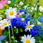 Почему у растений есть цветы? Для чего нужны растениям  цветы?