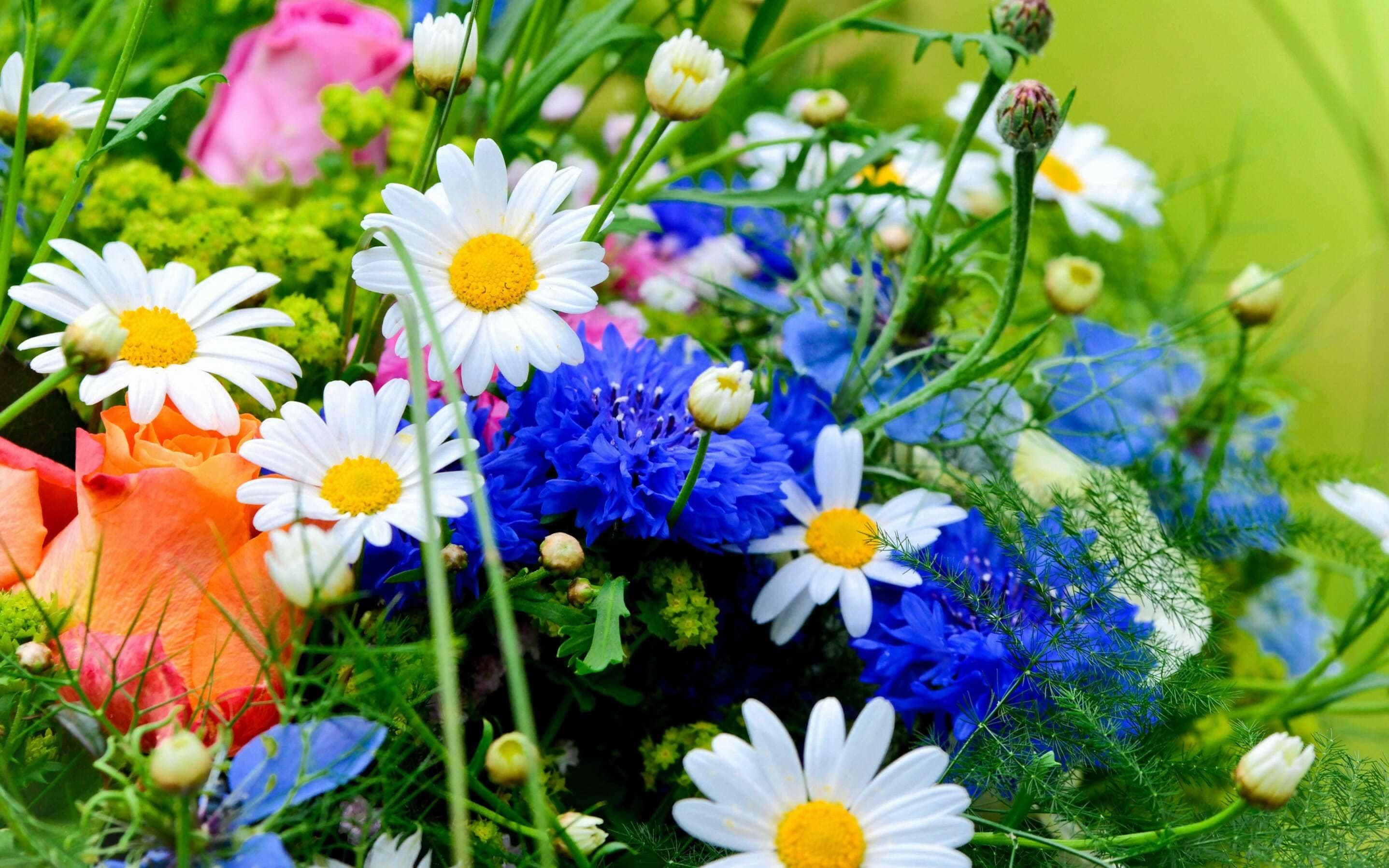 http://www.voprosy-kak-i-pochemu.ru/wp-content/uploads/2014/12/flowers.jpg