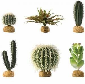 Кактусы - растения пустыни