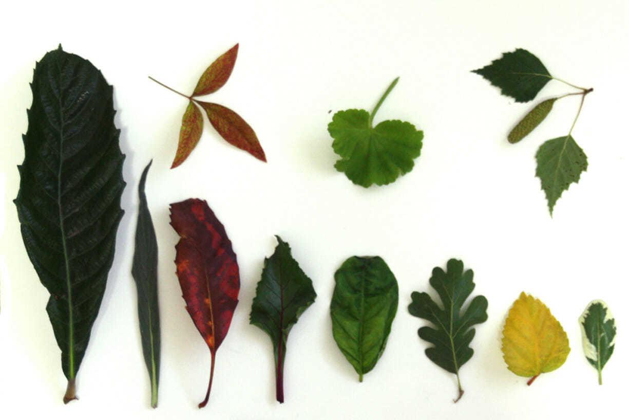 Листья разной формы