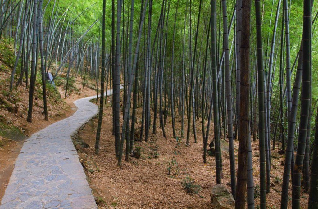 Знаменитая лощина черного бамбука