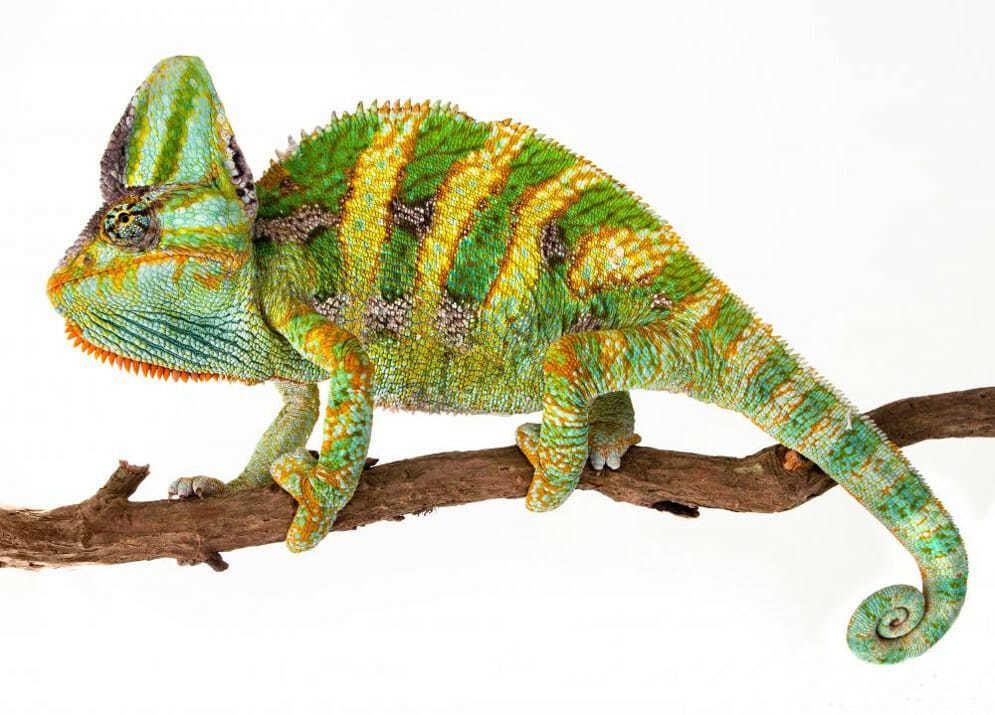 Леска цвета хамелеон