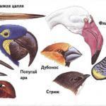 Птицы: крылья, перья и гнёзды