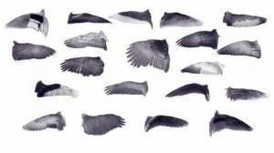 Крылья птиц