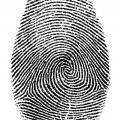 Почему отпечатки пальцев разные?