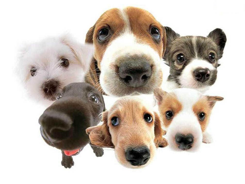 Собачий нюх