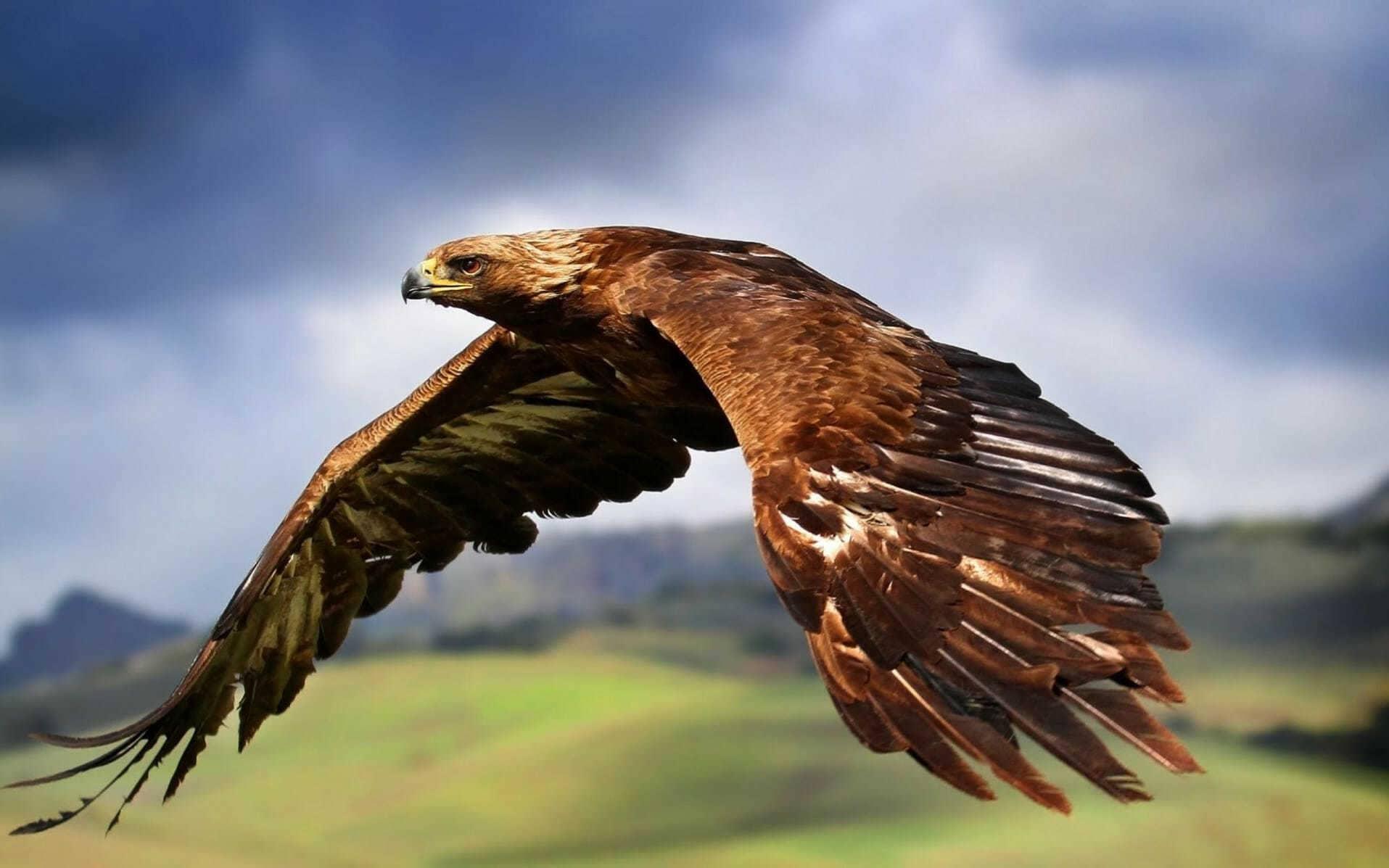 """Результат пошуку зображень за запитом """"орел"""""""