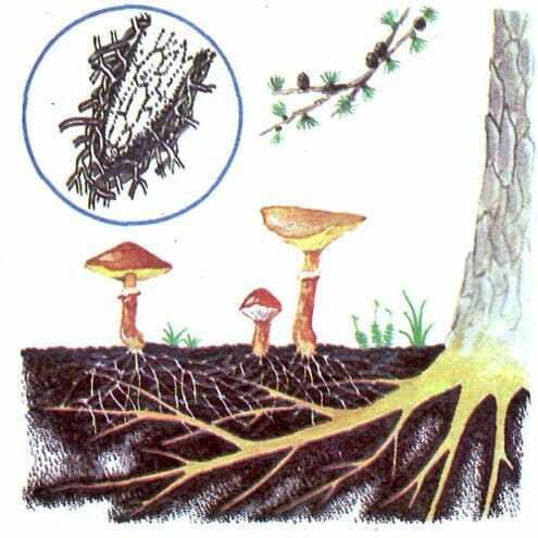 Симбиоз растений