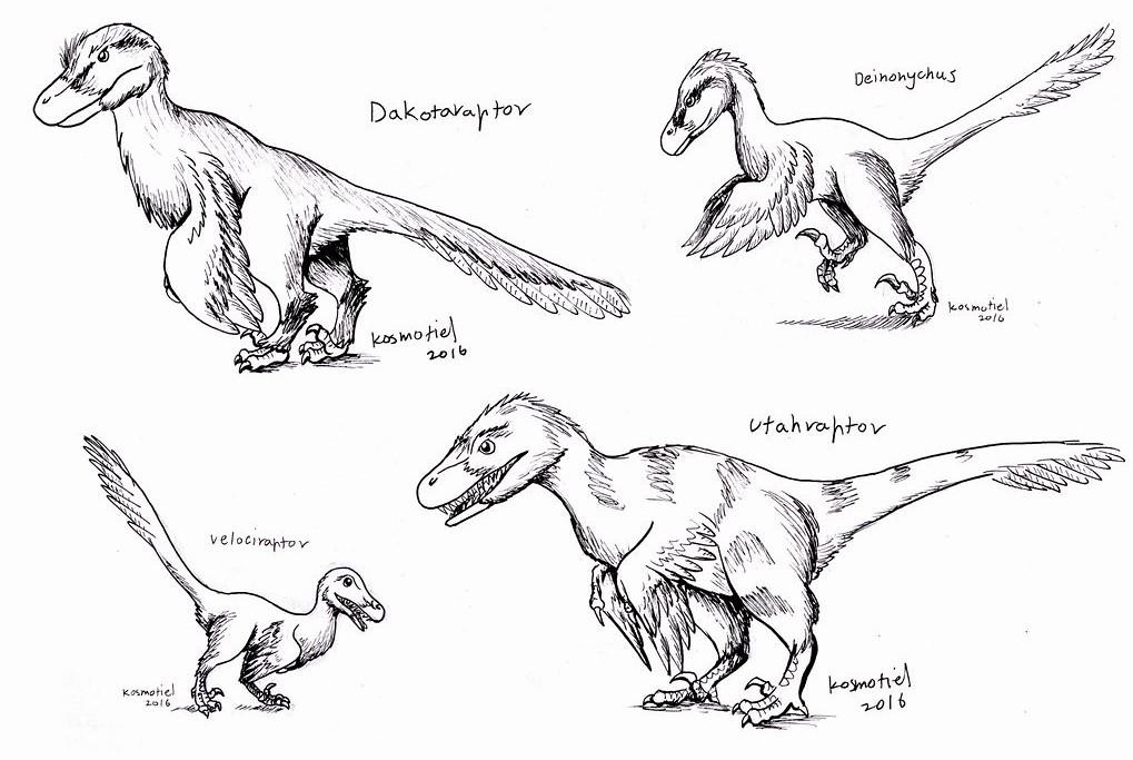 Разные виды дромеозавридов