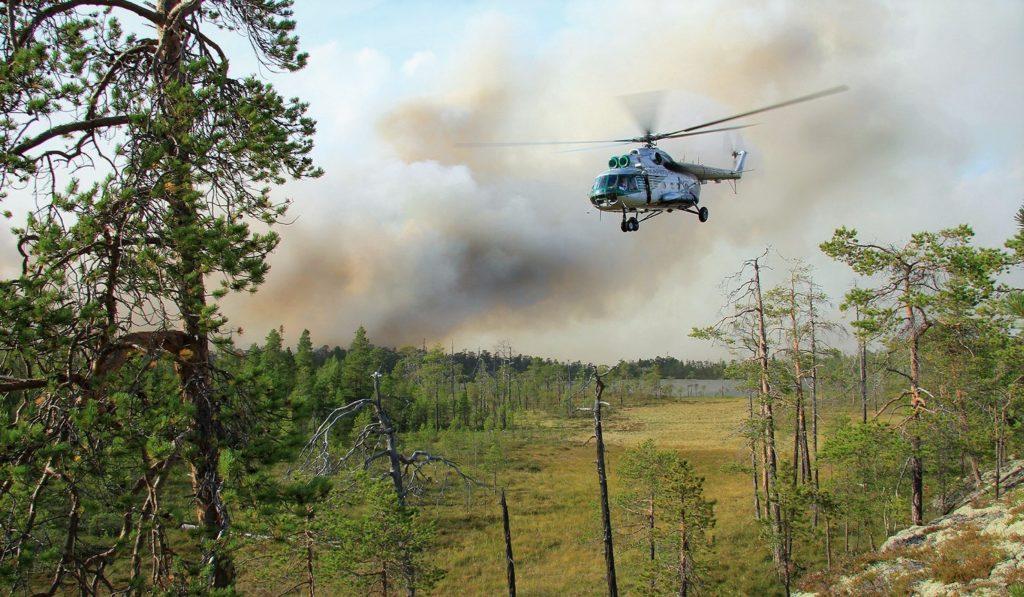 Люди стараются заботиться о территориях тайги и оперативно отправляются на тушение пожаров