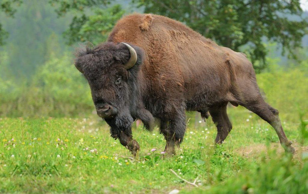 Когда среди популяции животных повышается смертность, ее численность снижается - это пример гомеостаза