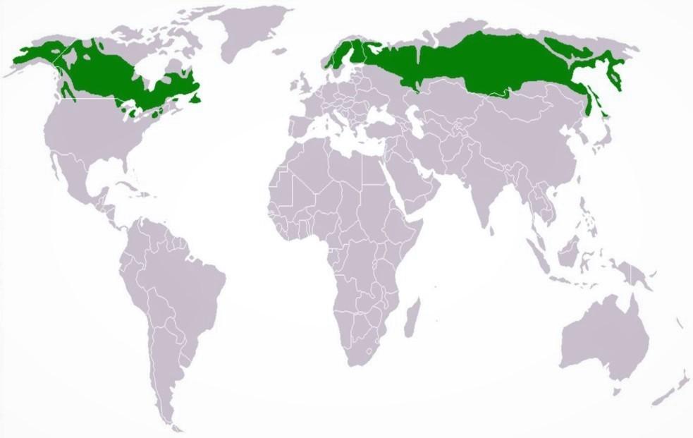 Карта расположения тайги