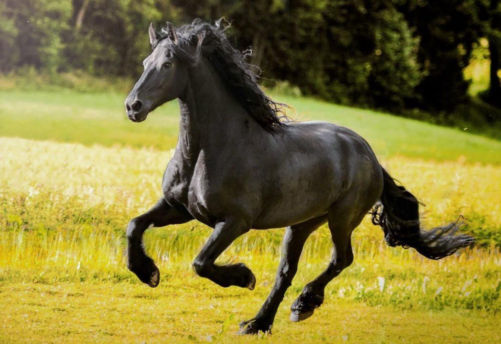 Лошадь способна разгоняться до 60 км/ч