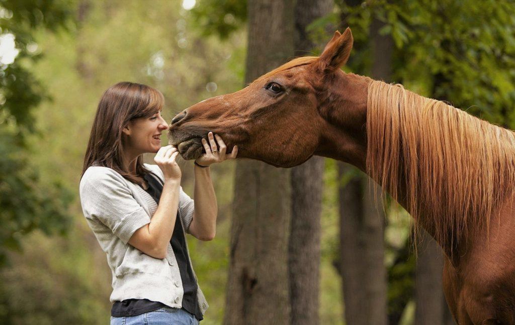 Человек и лошадь прекрасно ладят уже на протяжении нескольких тысяч лет