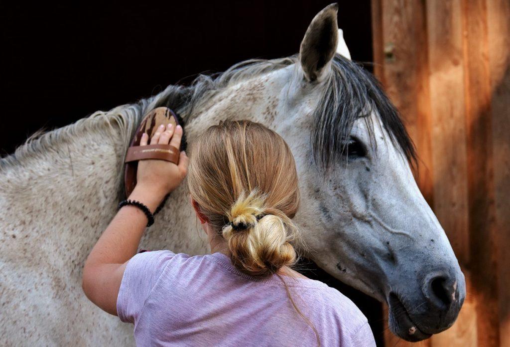 Лошади требуют регулярного ухода