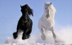 Лошади 🌟 Породы, список, названия, характер, особенности, описание, фото и видео