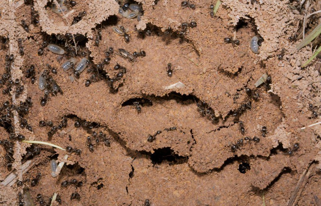 Фото муравейника крупным планом